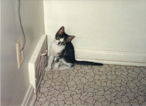 Kosey as a kitten by the vent.